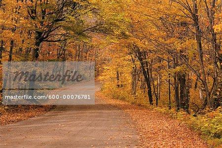 Road through Trees in Autumn, Algonquin Provincial Park, Ontario, Canada