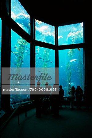 Back View of People Looking at Fish in Aquarium,  Monterey Bay Aquarium, Monterey, CA, USA