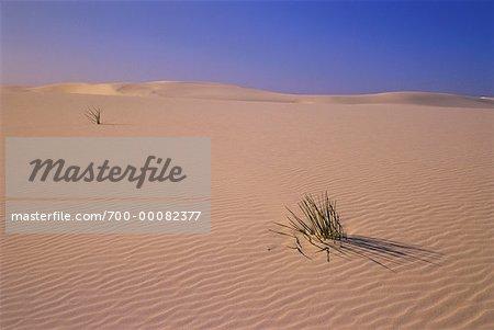 Yuccas et Dunes de sable de sable blanc National Monument au Nouveau-Mexique, États-Unis