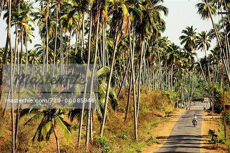 Road to Chidiya Tapu and Trees Andaman Islands, India