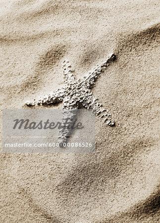 Starfish in Sand