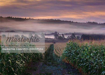Terres agricoles près de Antigonish (Nouvelle-Écosse), Canada