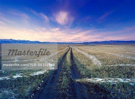Tire Tracks in Field at Dusk Alberta, Canada