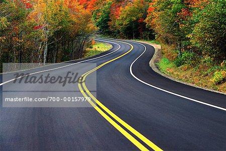 Route courbée à l'automne