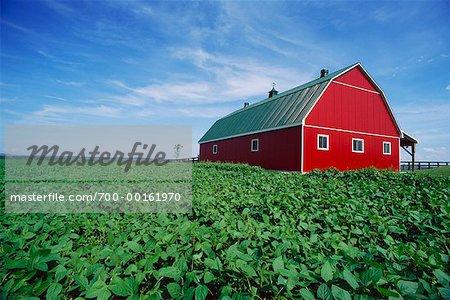 Grange et champ de soja