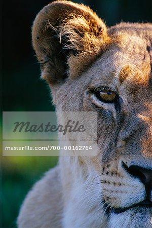 Lionne Kwetsani, Botswana, Afrique