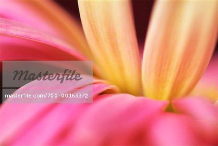 Nahaufnahme, Blume