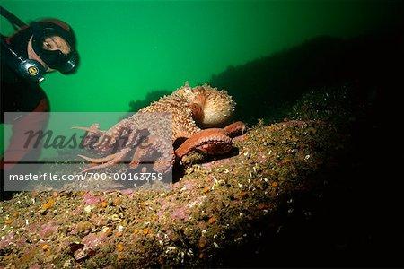 Plongeur et le poulpe