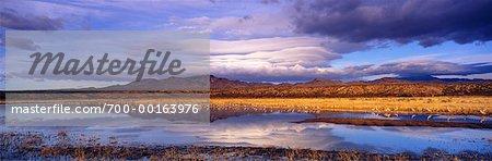 Bosque del Apache and Sandhill Cranes National Wildlife Refuge New Mexico, USA