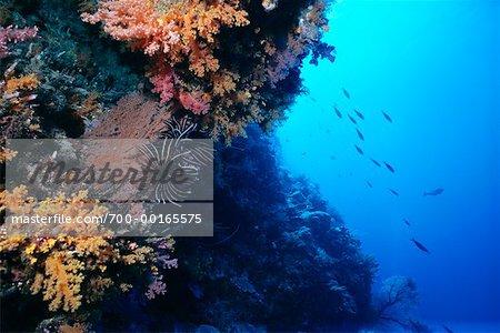 Underwater View of Coral Reef