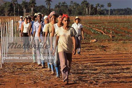 Farm Workers Cuba