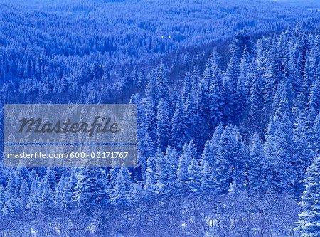 Chute de neige fraîche, près de parc National Waterton, Alberta, Canada