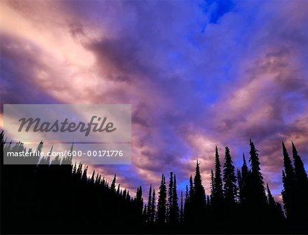 Dawn, le Parc National du Mont-Revelstoke, Colombie-Britannique, Canada