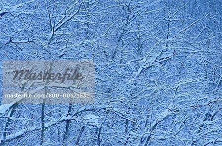 Arbres couverts de neige, Parc National Banff, Alberta, Canada