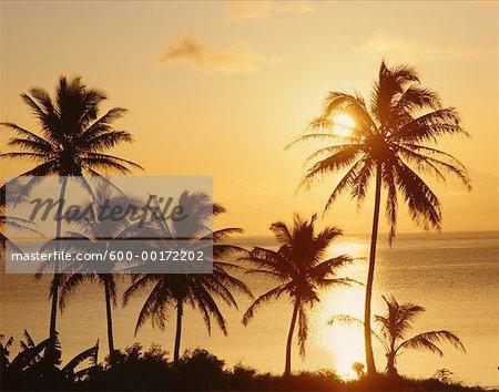 Coucher de soleil sur les palmiers, Oahu, Hawaii, USA