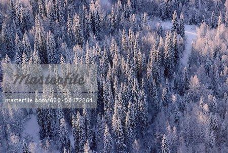 Neige sur les arbres, du Nord de la Colombie-Britannique, Canada