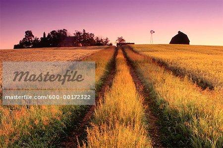 Ferme rurale à l'aube, Alberta, Canada