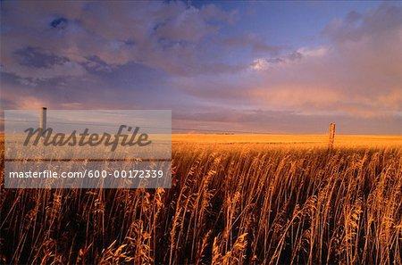 Coucher du soleil, le sud de l'Alberta, Canada