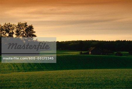 Farm, South of Sherwood Park, Alberta, Canada