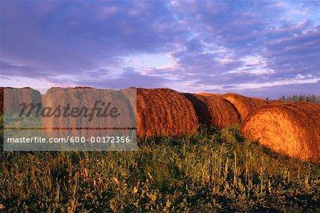 Balles de foin au lever du soleil, Alberta, Canada