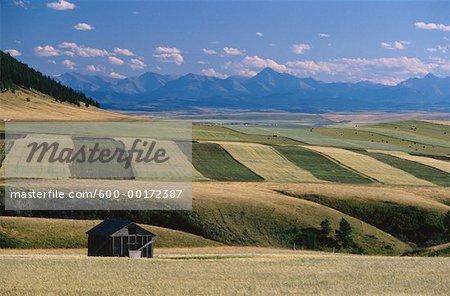 Grain champs près de Pincher Creek, Southern Alberta, Canada