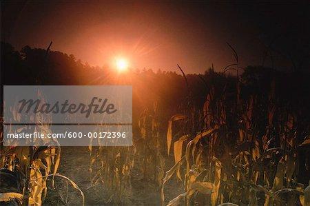 Lever du soleil sur le champ de maïs, New Hampshire, USA