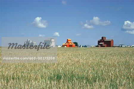 Élévateurs à grain, blé champ, Saskatchewan, Canada