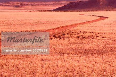 Route traversant le désert herbeux, Namaqualand, Afrique du Sud