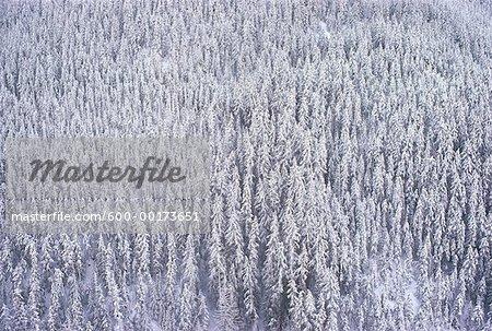 Arbres couverts de neige, Parc Provincial Manning, Colombie-Britannique, Canada