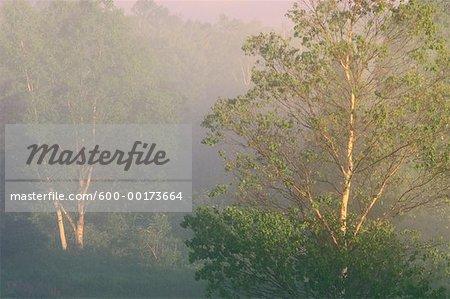 Brume matinale, Bluff, Nouveau-Brunswick, Canada de personne