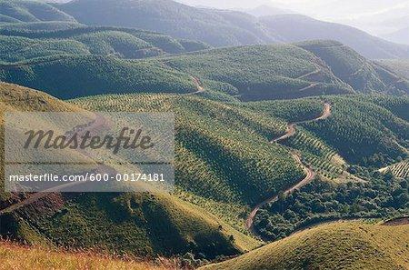 Sylviculture, Long Tom Pass, Drakensberg en Afrique du Sud