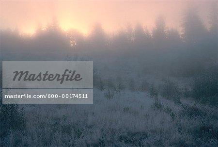 Morning Mist & Frost, près de Kingston, Nouveau-Brunswick, Canada