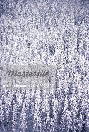 Arbres enneigés, Parc Provincial Manning, Colombie-Britannique, Canada