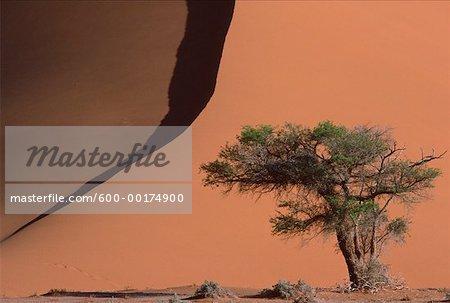 Arbre et dunes de sable, Namibie
