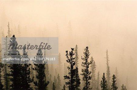 Morning Fog In Foothills Near Hinton, Alberta, Canada