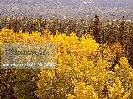 Couleurs d'automne, Parc National Jasper, Alberta, Canada