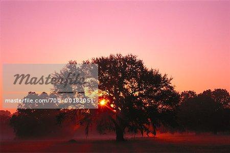 Sonnenuntergang hinter Eiche Baum Tallahassee, Florida USA
