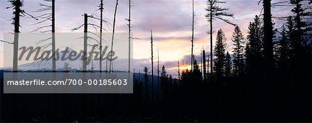 Mt. Hood bei Sonnenuntergang Oregon, USA