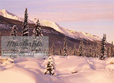 Mountains over Forest Jasper National Park Alberta, Canada