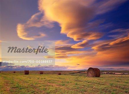 Bottes de foin dans le champ au coucher du soleil (Alberta) Canada