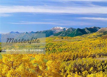 Übersicht über Wald und Berge Alberta, Kanada