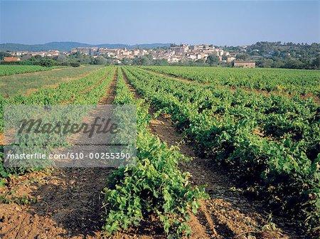Vignes de France, Provence,