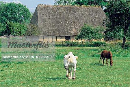 France, Normandie, maison normande et chevaux