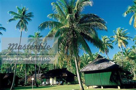 Polynésie, île de Moorea, des maisons et des palmiers