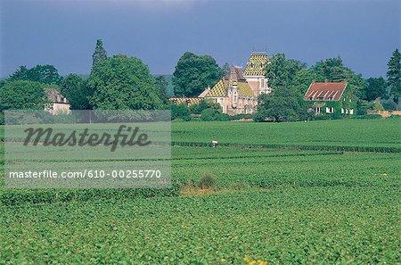 France, Bourgogne, Pineau Noir et vignes de Chardonnay près de Gevrey