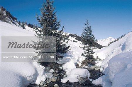 France, Alps, La Plagne, pines in the snow