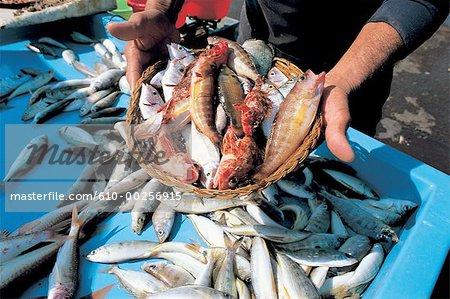 France, Provence, Marseille, Port-Vieux marché aux poissons, poissons de la bouillabaisse