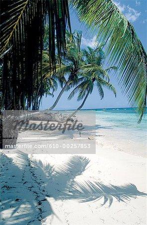 République dominicaine, la plage de Punta Bonita et palmes