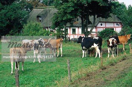 Danemark, ferme près de Visborg