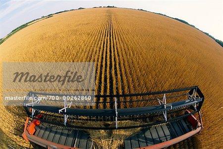 Combiner la récolte de blé